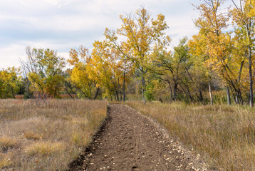 Dirt Trail Surrounded by Fall Foliage