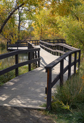 Boardwalk Footbridge Surrounded by Fall Foliage