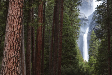 Yosemite Falls seen through trees in forest