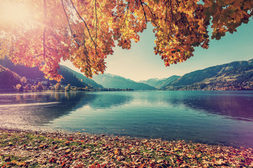 Fotomurales - Sunny Day at the Lake Zell, in Ausrtian Alps. Colorful Leafes under Sunlight. Unusual Summer Landscape. Vintage style. Instagram Filter. Zell am See. Austria. Nature Background.