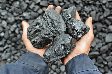 Coal in the hands of worker miner
