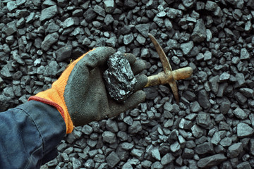 Hand of the miner shows coal in mine. Picture can be use to idea about coal mining, energy source or environment protection.