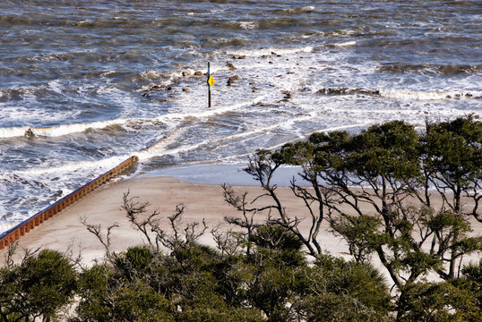 Maritime Forest and Atlantic Ocean View at Hunting Island SC