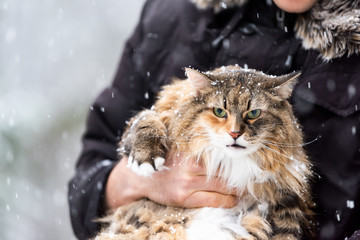 Closeup of young man holding angry, scared meowing maine coon cat outside, outdoors in park in snow, snowing, during snowstorm, storm with snowflakes, flakes falling