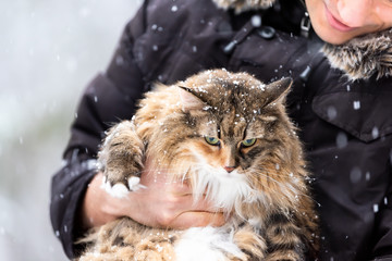 Closeup of young happy man holding maine coon cat outside, outdoors in park in snow, snowing, during snowstorm, storm with snowflakes, flakes falling