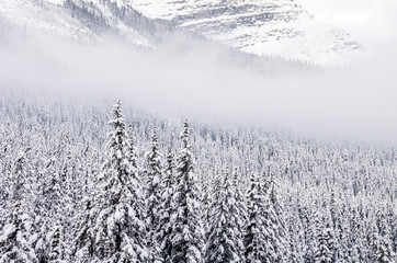 Snowy Winter Mountain Forest Scene