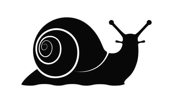 Snail graphic icon. Snail symbol. Snail black silhouette isolated on white background. Logo. Vector illustration