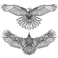 Eagle flying on white illustration. Bird.