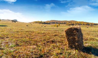 Haystacks on the grasslands of Inner Mongolia