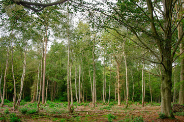Mixed Woodland 1