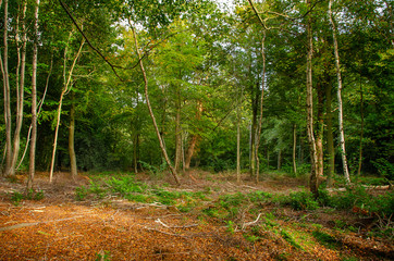 Mixed Woodland 3