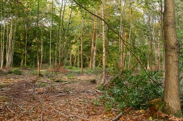 Mixed Woodland 5