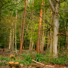Mixed Woodland 6