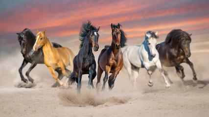 Wall Mural - Horses run gallop free in desert dust against storm sky