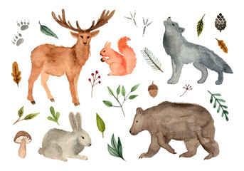 watercolor illustration forest team animals. hand painted isolated elements.