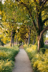 Beautiful tree-lined path in Springtime late afternoon
