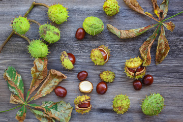 Chestnut with dry leaves on old wooden background. Top view