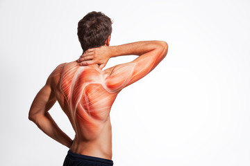 Man's back muscle and body structure. Human body view from behind isolated on white background. Wall mural