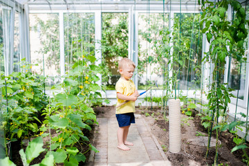 Cute toddler boy working in the greenhouse