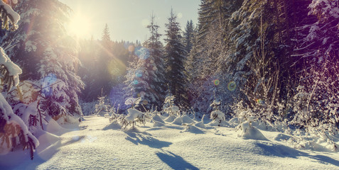Wonderful Winter Nature Background