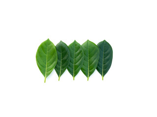Top view green leaves on white background. Flat lay, Collection of green leaf