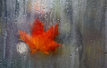 autumn window leaf rain drops