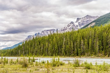 Wall Mural - Nature and mountains near Coleman creek in Canadian Rocky Mountains.