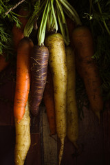 Freshly picked heirloom or heritage carrots in a variety of colours shot with dark creative lighting
