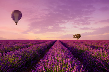 Poster Montgolfière / Dirigeable Lavender rows lines with lonely tree and hot air balloon at sunset iconic Provence fields landscape