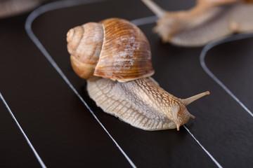 Snail on a race track competition motivation concept