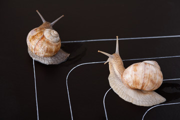 Racing snails go off track rules disobey concept