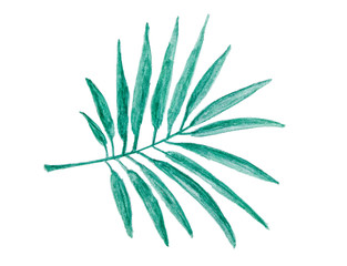 Watercolor painting - tropical green palm leaf isolated on white