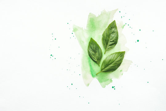 top view of basil leaves on white surface with green watercolor strokes