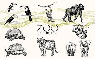 Vector hand drawn monochrome animals set. Zoo animals: toucan bird, chimpanzee, gorilla, panda, turtle.