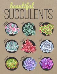 Different kind of succulents. Vector floral illustration.