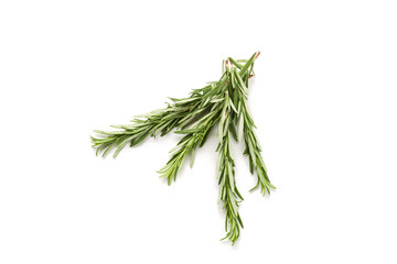 A branch of rosemary isolated on white background