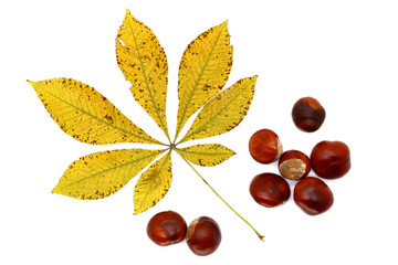 ripe chestnut and leaves close up, isolated