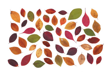 ricolorful autumn leaves, background, isolated, texture