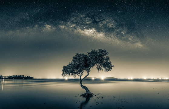 Black and white image of Night sky with stars and silhouette mangrove tree in sea. Long exposure photograph.