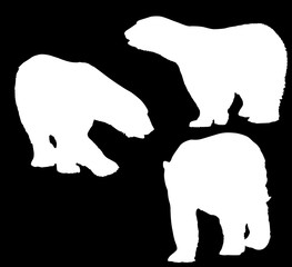 three large polar bears white isolated silhouettes