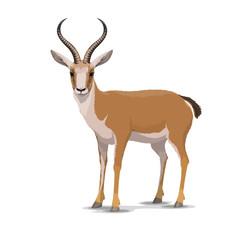 Cartoon goitered gazelle animal, vector