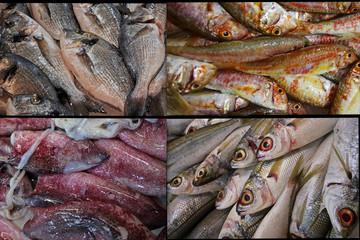 Balık fotoğraflarından oluşan kolaj