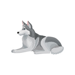 Flat vector icon of Siberian husky lying isolated on white background. Dog with fluffy gray coat. Home pet. Domestic animal