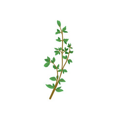 Small branch of fresh green thyme. Aromatic plant. Culinary herb with small leaves. Organic product. Flat vector icon