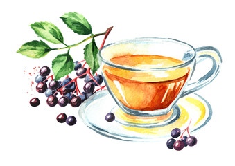 Elder tea. Watercolor hand drawn illustration, isolated on white background