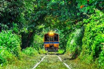 Train through a tunnel of trees in Bangkok, Thailand.