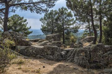 Rocas y pinos/  Pinos entre rocas en un bosque de las Navas del Marques, provincia de  Avila. Castilla León España.