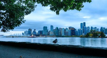 Eine Ente sitzt an einem wolkigen Herbstmorgen vor der Skyline von Vancouver