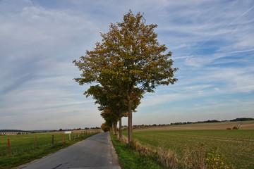 Baumreihe an einer Landstraße