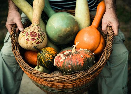 Man holding basket with pumpkins